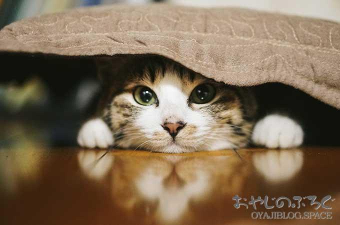 寒い冬ですがフローリングに布団を敷いてもこれがあったら大丈夫!
